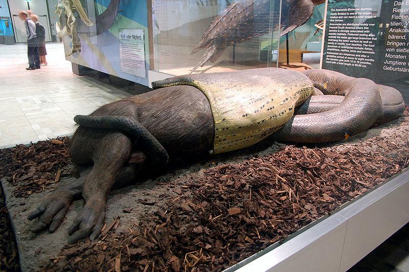 Reptileworld Subrahmanya Voor Kids Slangen Vragen